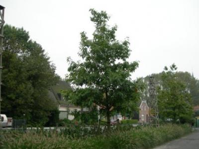 terraviva_arbre1
